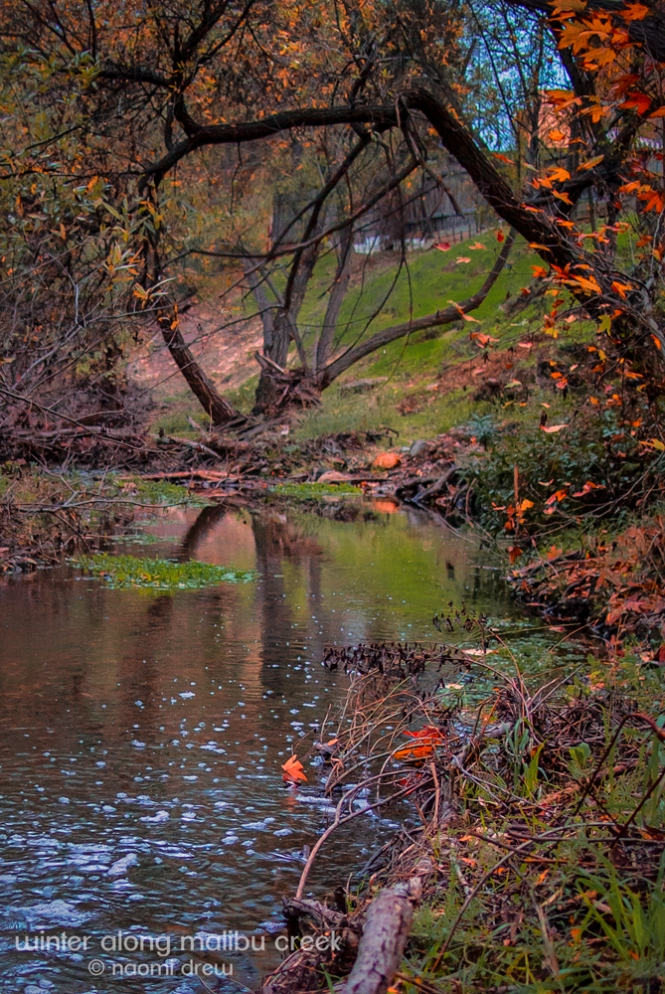 Winter Along Malibu Creek