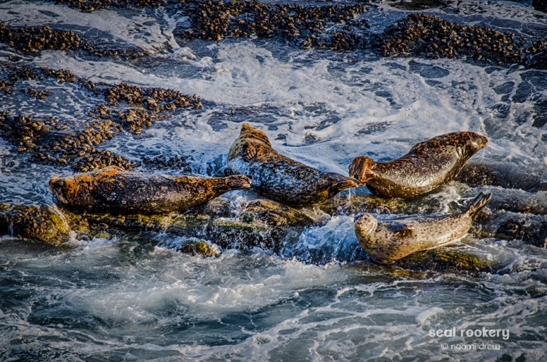 Seal Rookery