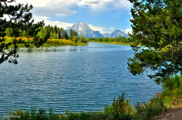 Oxbow Bend Through the Trees