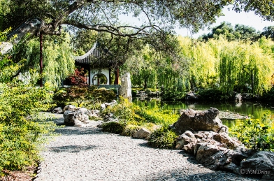 In the Chinese Garden i