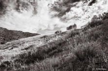 Beneath the Sheltering Sky BW