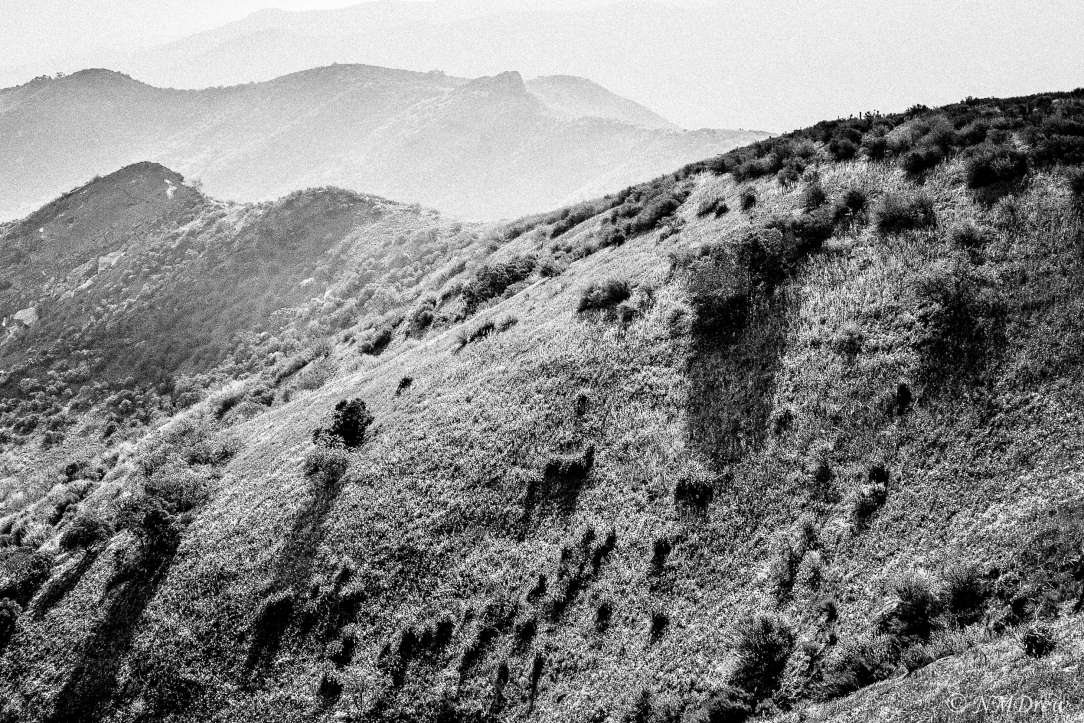 Shadows on the Hillside BW