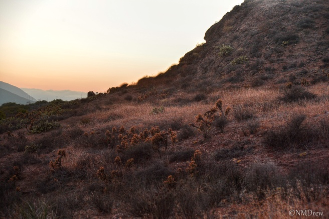 Cholla at Sunset