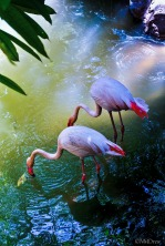 Flamingo Pond (2 of 3)