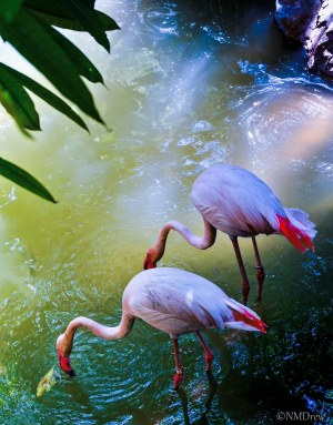 Flamingo Pond (3 of 3)