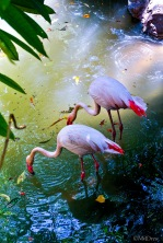 Flamingo Pond Original (1 of 1)