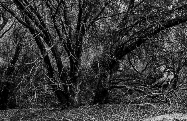 Once Upon A Time, In A Deep, Dark Wood . . ._