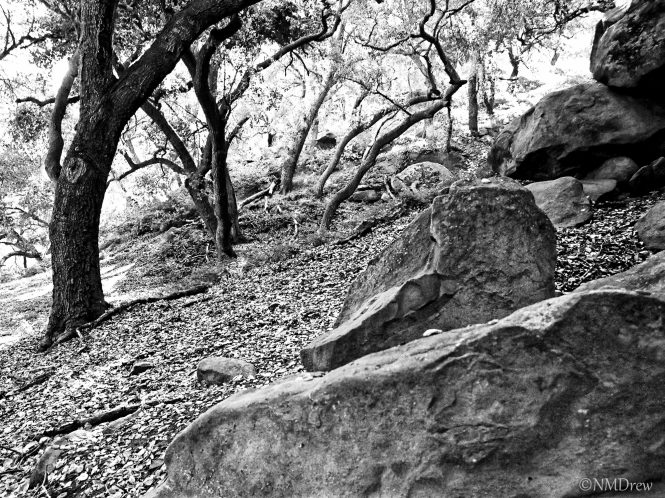 Rocks & Trees (1 of 1)