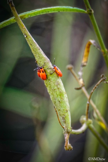 Little Red Bugs