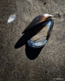 Shell & Feather