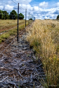Fence Line (1 of 1)