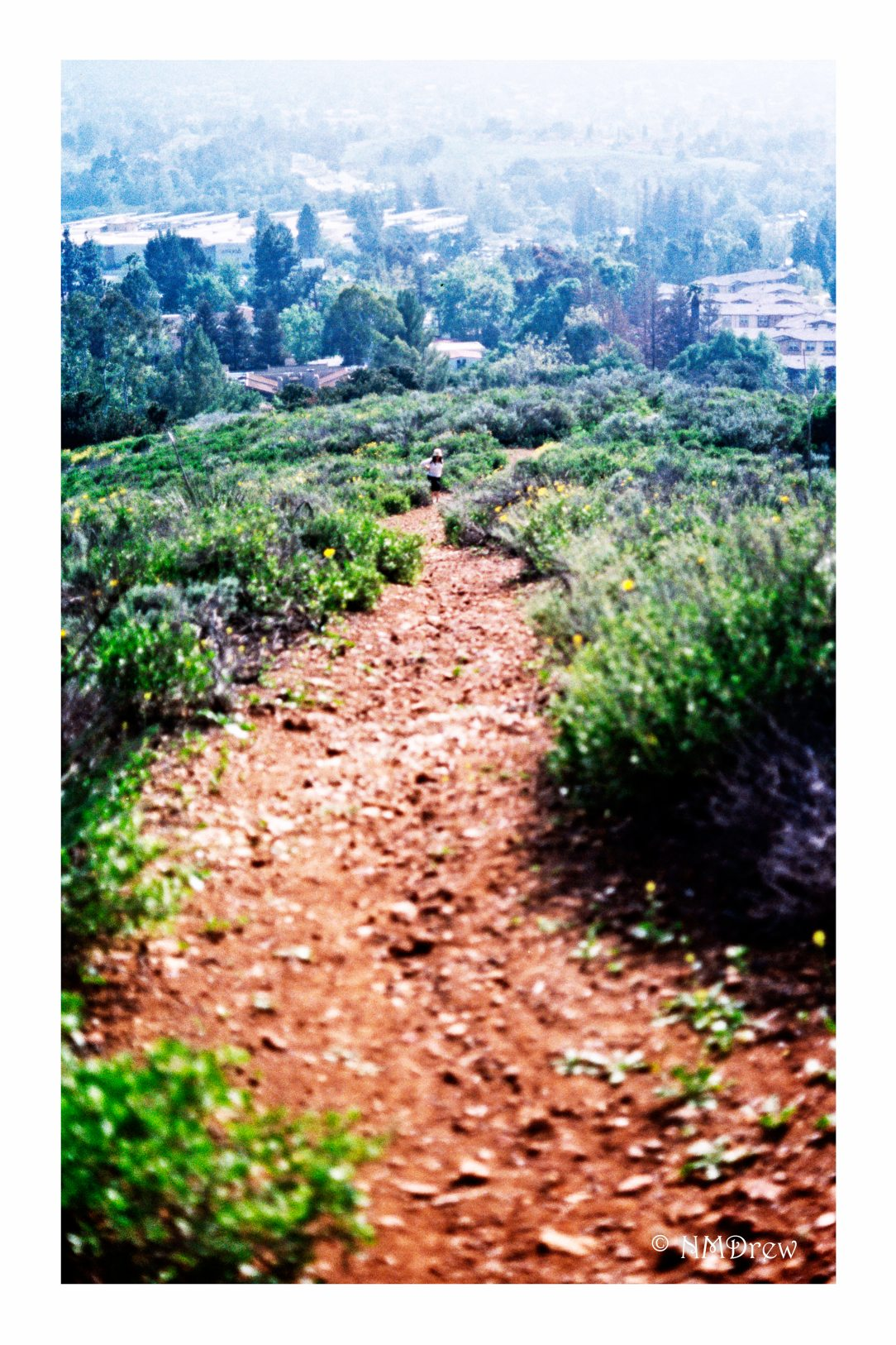 Path Toward Home