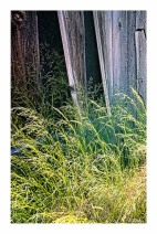 Grasses & Boards
