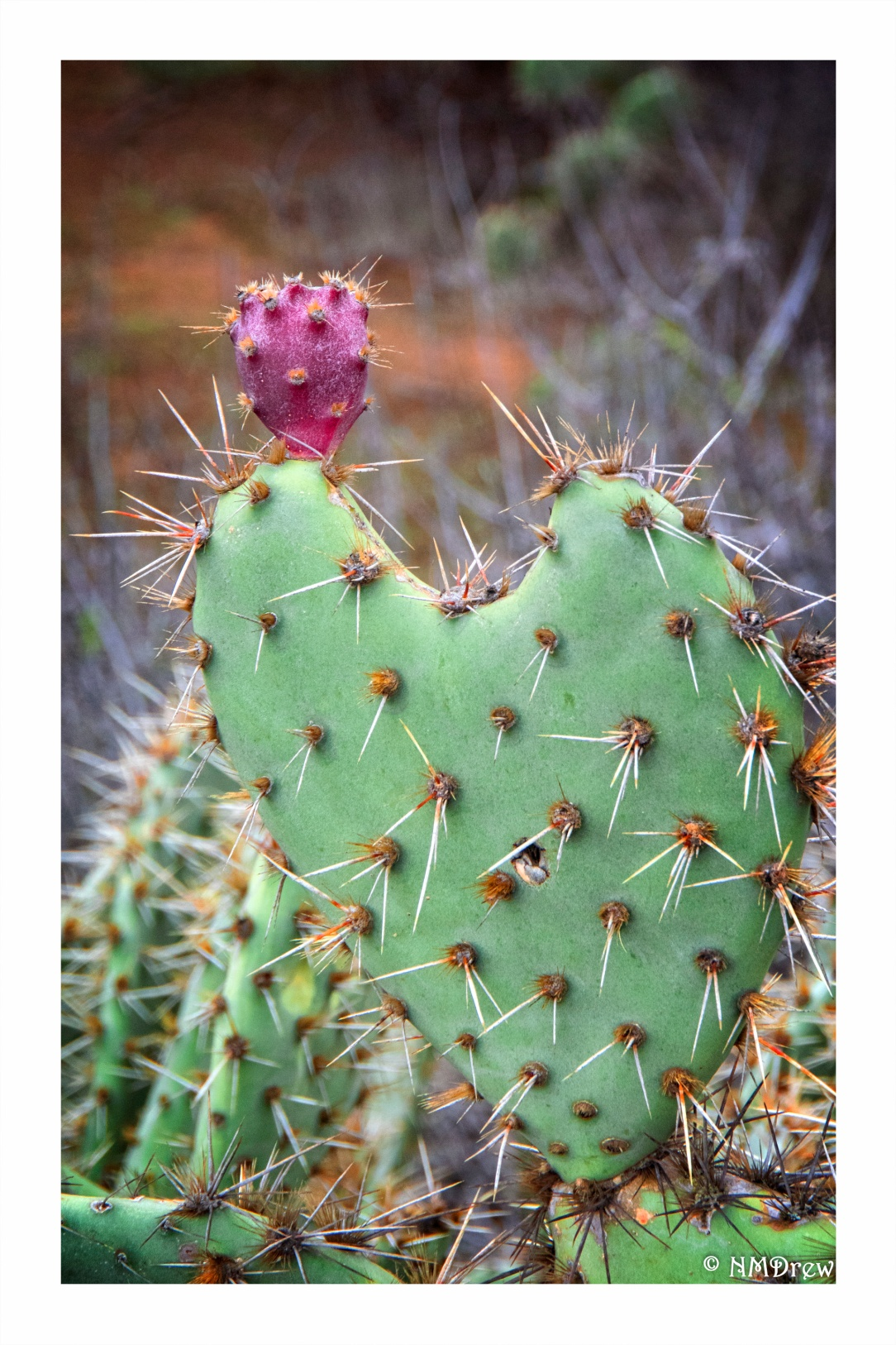 prickly-love