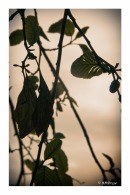 leaves-against-a-stormy-sky