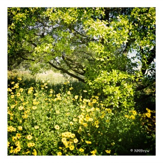 Daisy & Tree Pano-Edit