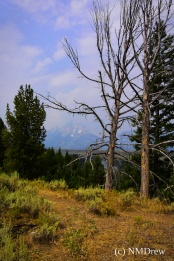 A View of the Tetons