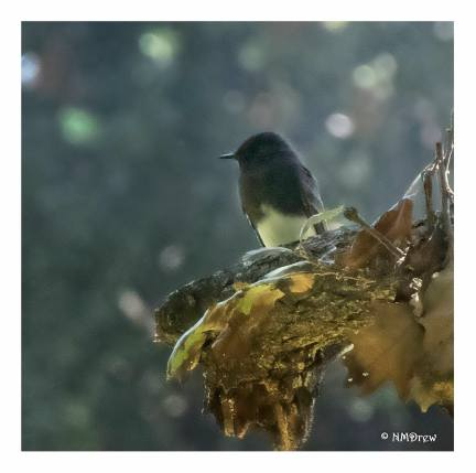 Bird with Noise Reduction