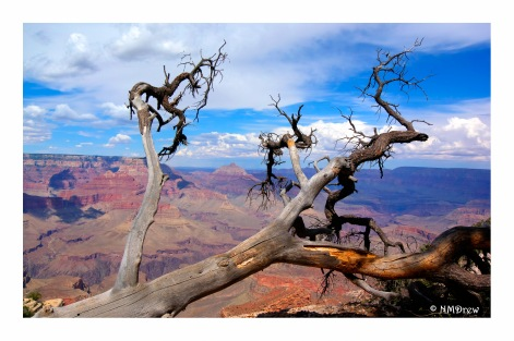 Views of the Grand Canyon (4 of 12)