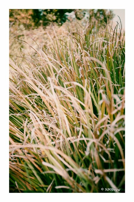 Summer Grasses (1 of 1)