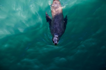 Sea Lion (13 of 20)