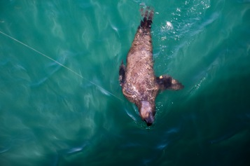 Sea Lion (8 of 20)